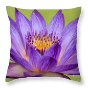 Water Lily Lindsey Woods Macro Throw Pillow
