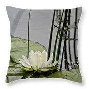 Water Lily Pictures 48 Throw Pillow