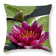 Water Lily Pictures 66 Throw Pillow