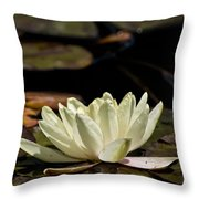 Water Lily Pictures 67 Throw Pillow