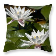Water Lily Pictures 75 Throw Pillow