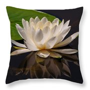 Water Lily Pictures 81 Throw Pillow