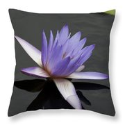 Water Lily Teri Dunn Throw Pillow