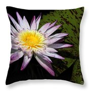 Water Lily With Lots Of Petals Throw Pillow