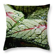 Water On The Leaves Throw Pillow