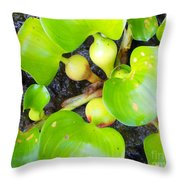 Water Plants 1 Throw Pillow