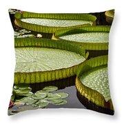 Water Platter Charm Throw Pillow