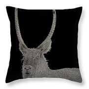 Waterbuck B W Abstract Throw Pillow