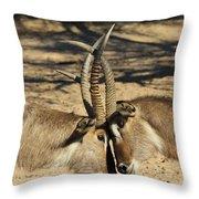 Waterbuck Bull Beauty Throw Pillow