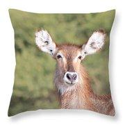 Waterbuck Cow Portrait Throw Pillow
