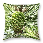 Watercolor Of Ripening Pine Cone Throw Pillow