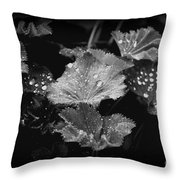 Waterdroplets Throw Pillow