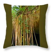 Waterfall Of Jungle Tree Roots Throw Pillow