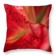 Watermelon Lily Throw Pillow by Rachel Cohen