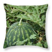 Dew On The Mellon Throw Pillow