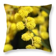 Wattle Flowers Australian Native Throw Pillow