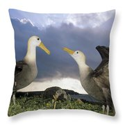 Waved Albatross Courtship Dance Throw Pillow