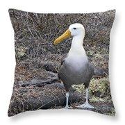 Waved Albatross Diomeda Irrorata Throw Pillow