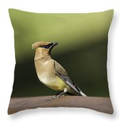 Waxwing At The Park Throw Pillow