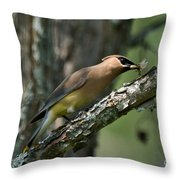 Waxwing Lunchtime Throw Pillow