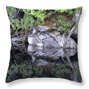 Weathered Reflection Throw Pillow