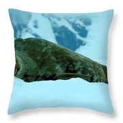 Weddell Seal Throw Pillow