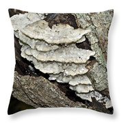 Weep No More My Baby - Bracket Fungi - Tyromyces Balsamea Throw Pillow