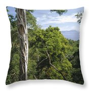 Weeping Fig And Host Natu Tree Sulawesi Throw Pillow