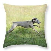 Weimaraner Dog Running Throw Pillow