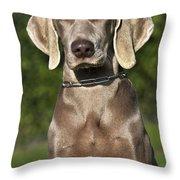 Weimaraner Hunting Dog Throw Pillow