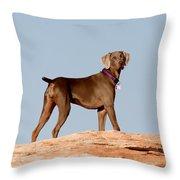 Weimaraner IIi - Lake Powell Throw Pillow