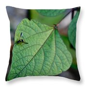 Well Dressed Hymenopteran Throw Pillow