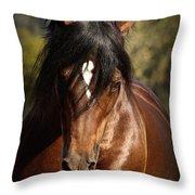Welsh Cob Stallion Throw Pillow