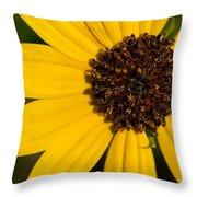 West Coast Dune Sunflower Throw Pillow