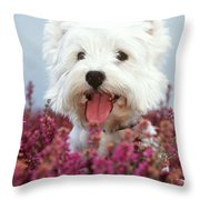West Highland Terrier Dog In Heather Throw Pillow