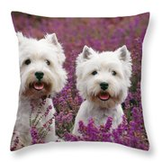 West Highland Terrier Dogs In Heather Throw Pillow