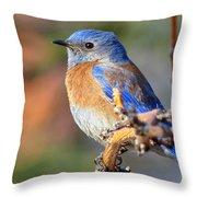 Western Bluebird Profile Throw Pillow