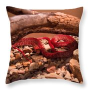 Western Coachwhip Red Phase Throw Pillow