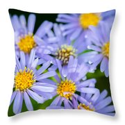 Western Daisies Asters Glacier National Park Throw Pillow