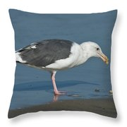 Western Gull Eating Clam Throw Pillow