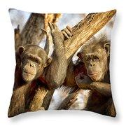 Western Lowland Gorillas Throw Pillow