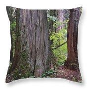 Western Red Cedar Grove Throw Pillow