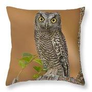 Western Screech Owl Juvenile Utah Throw Pillow