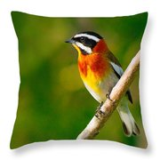 Western Spindalis Throw Pillow by Tony Beck