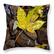 Wet Autumn Leaf On Stones Throw Pillow