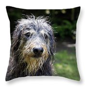 Wet Dog Throw Pillow