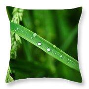 Wet Grasses Throw Pillow