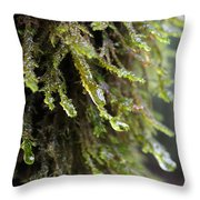Wet Redwood Branches Throw Pillow