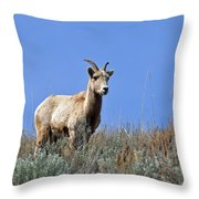 What Are Ewe You Looking At? Throw Pillow