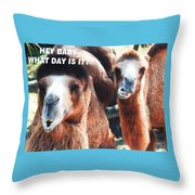 Camel What Day Is It? Throw Pillow